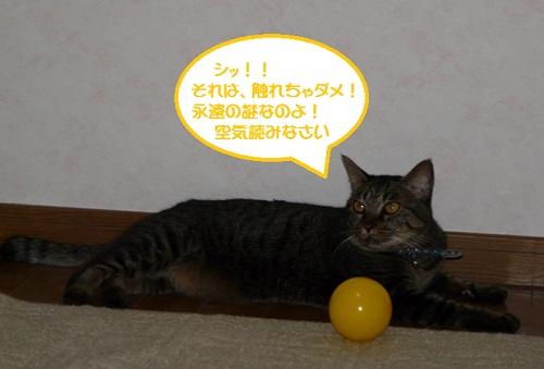 P1290201.jpg