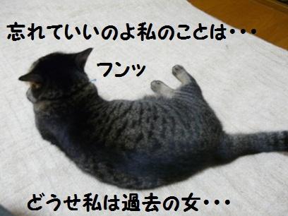 P1290883.jpg