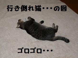 P1290922.jpg