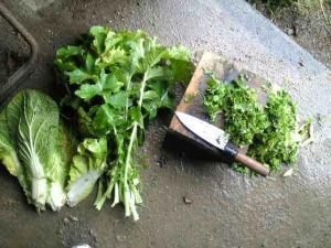 鶏の野菜1