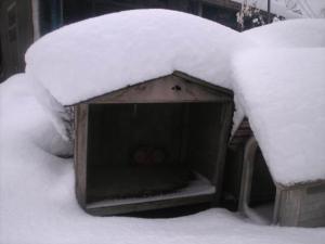 豪雪22.12.26.03