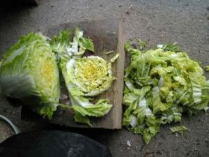 白菜・大根の雪中保存3