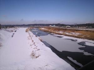 金流川の白鳥。