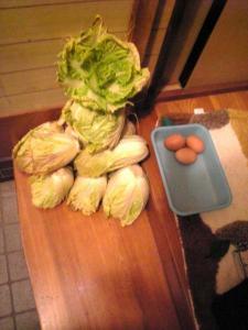 白菜最終収穫
