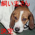 福島ビーグルくんs