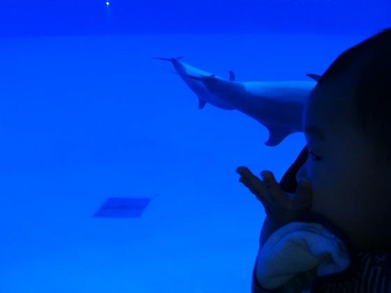 イルカとけいたん。