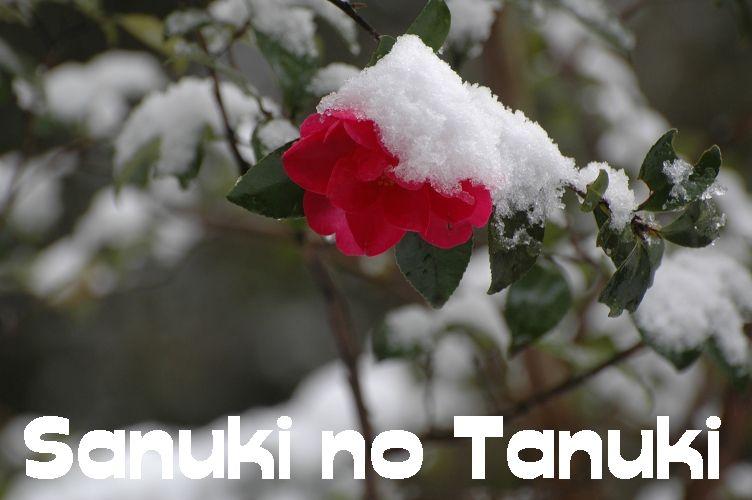 2011四国村雪2 059