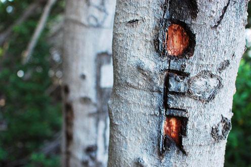 mangrob.jpg