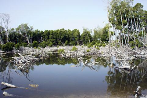 mangrobbbb.jpg
