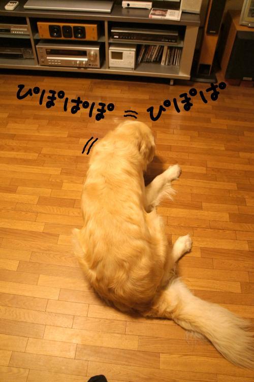 1_convert_20110908203338.jpg