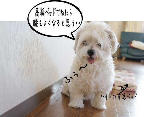 1_convert_20110914184318.jpg