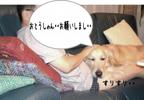 1_convert_20110918215611.jpg