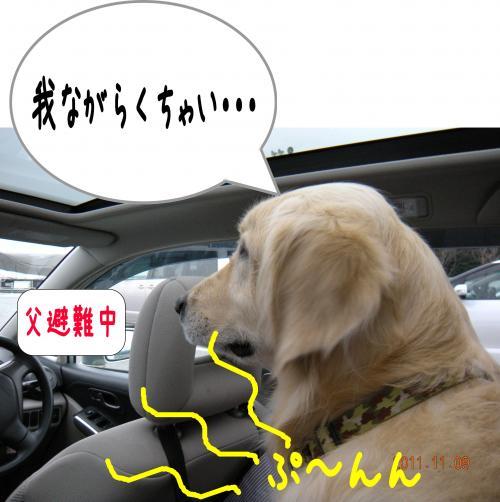 1_convert_20111117225143.jpg