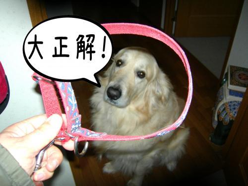 繧ォ繝・ご繝ウ5_convert_20110310161849