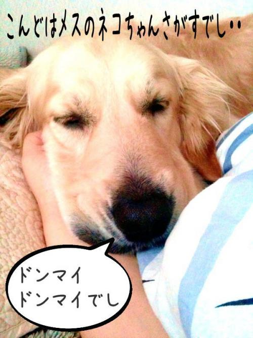 繧ォ繝・ご繝ウ10_convert_20110310163002