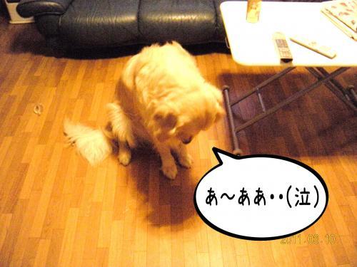繧ォ繝・ご繝ウ8_convert_20110310162814