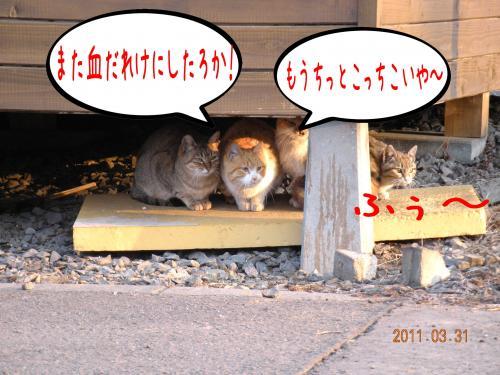 迪ォ2_convert_20110331184237