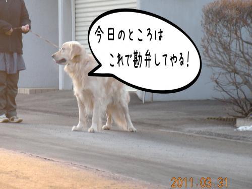 迪ォ3_convert_20110331184307