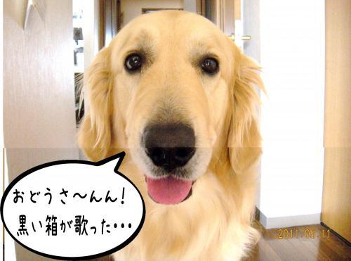 荳榊ッゥ迚ゥ5_convert_20110511133931