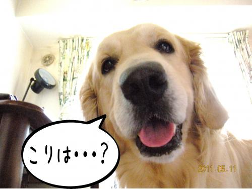 荳榊ッゥ迚ゥ2_convert_20110511133715