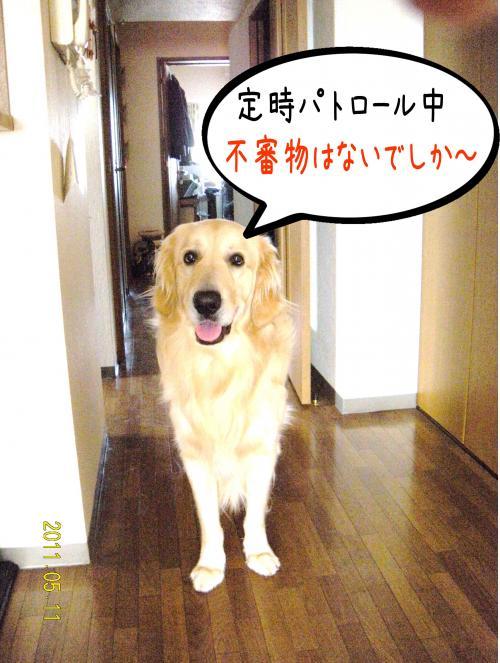 荳榊ッゥ迚ゥ1_convert_20110511131526