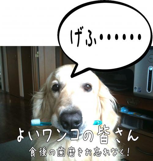 莠区ュ_convert_20110513165653