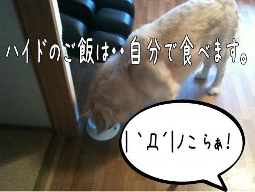 莠区ュ9_convert_20110513170304