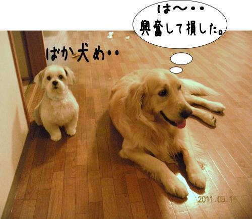 蠎雁ア・_convert_20110514213809