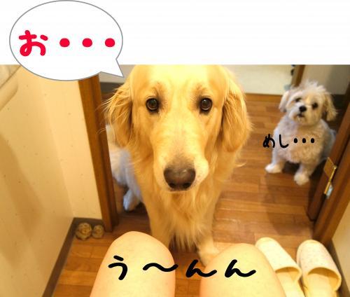 2_convert_20110815224503.jpg
