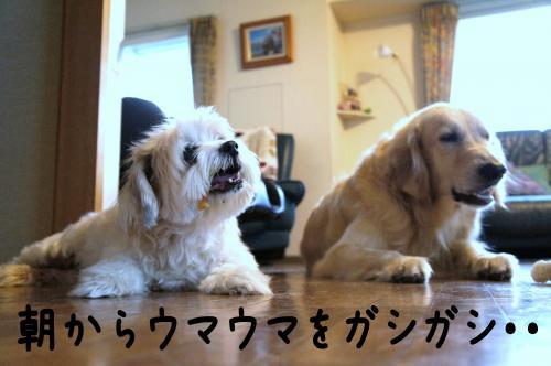 2_convert_20110906081433.jpg