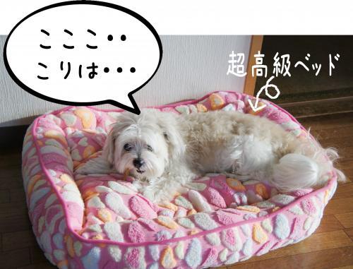 2_convert_20110914184414.jpg
