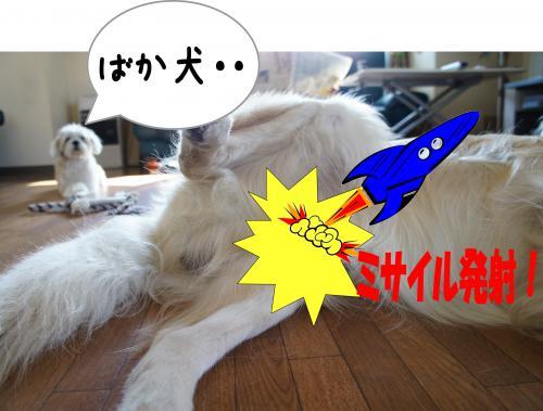 2_convert_20110924105554.jpg