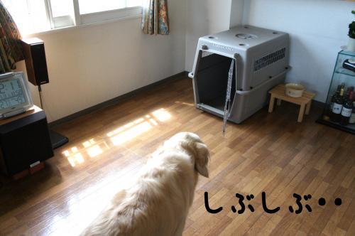 3_convert_20110731132422.jpg