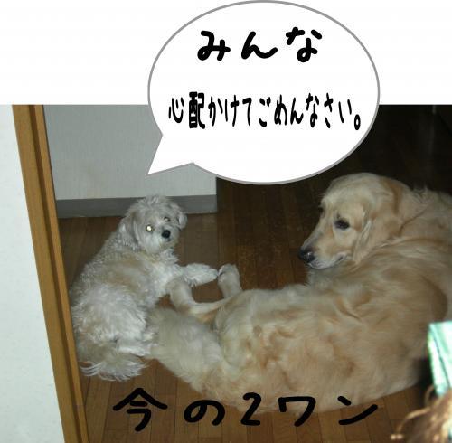 3_convert_20110906105031.jpg