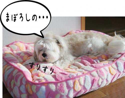 3_convert_20110914184456.jpg