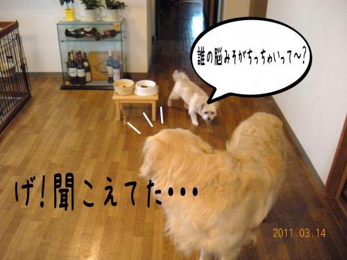 4_convert_20110415191832.jpg