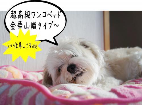 4_convert_20110914184531.jpg