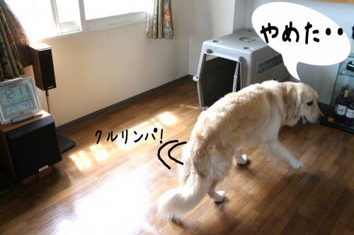 5_convert_20110731132521.jpg