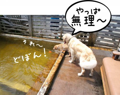 5_convert_20110808161020.jpg