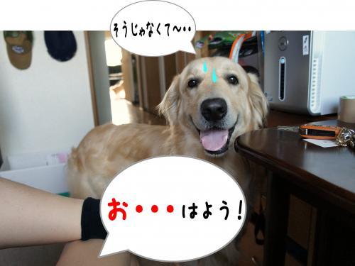 5_convert_20110815224613.jpg