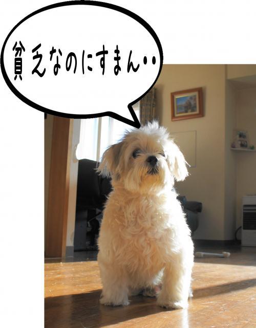 5_convert_20110914184606.jpg
