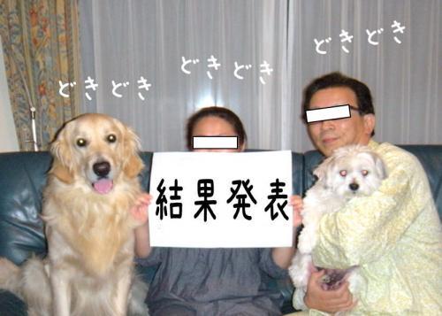 6_convert_20110415191936.jpg