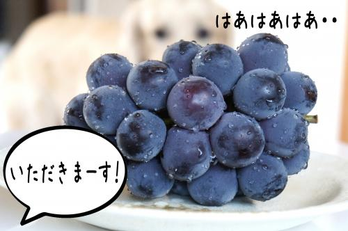 7_convert_20110823142624.jpg