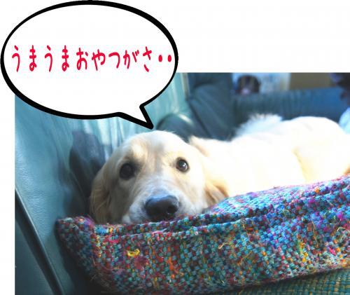 7_convert_20110901113720.jpg