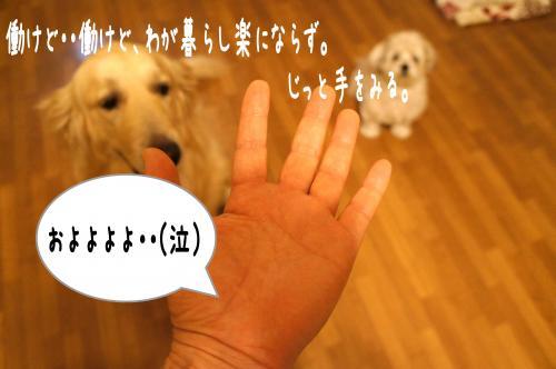 7_convert_20110908203647.jpg