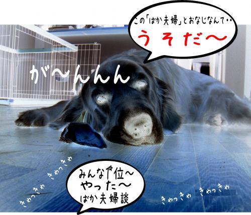 8_convert_20110415192053.jpg