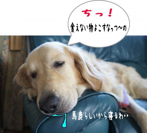 9_convert_20110828125320.jpg