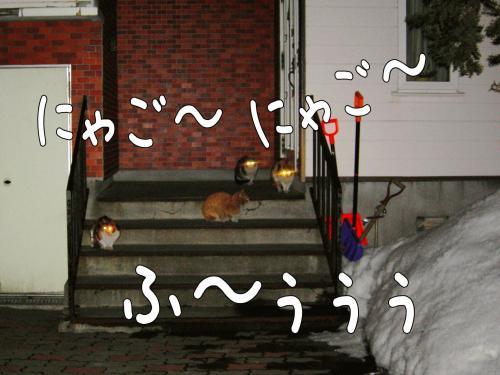 cat3_convert_20110329112420.jpg