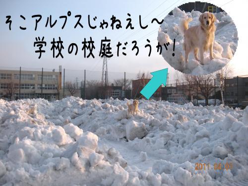 yume3_convert_20110405104834.jpg