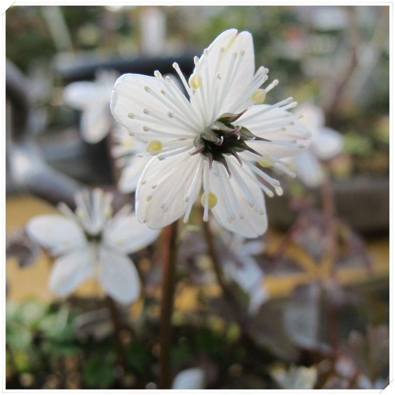 ■SS枠梅花オーレンG112013年1月園+FR_128